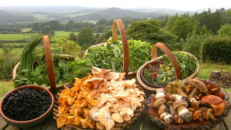 wilderness food foraging tips galloway foods