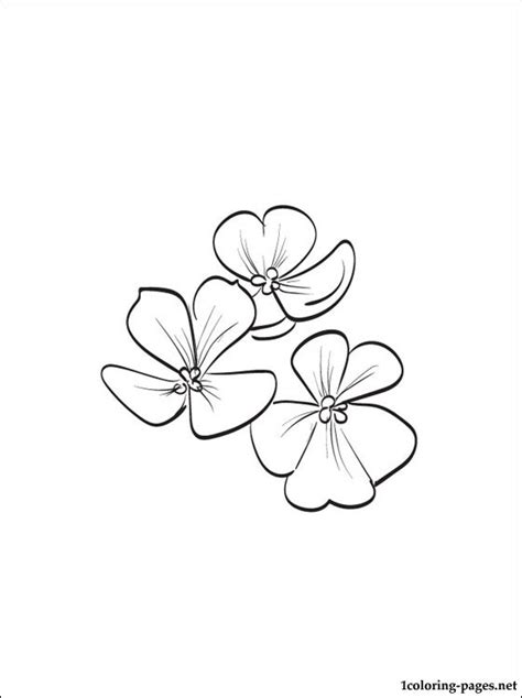 violet flower coloring pages coloring pages