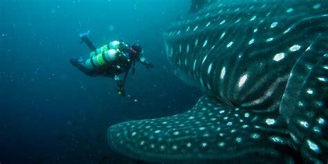dive galapagos galapagos islands scuba diving minor islet