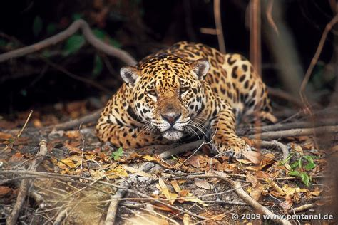 Small Bathroom Ideas Uk Pantanal Wetlands Brazil The Largest Freshwater Wetland