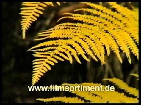 Wie Pflanze Ich 4365 by Biologie Botanik Fortpflanzung Und Entwicklung