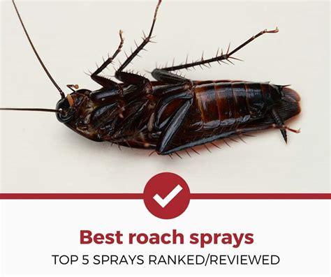 best cockroach top 5 best cockroach sprays 2018 complete guide pest