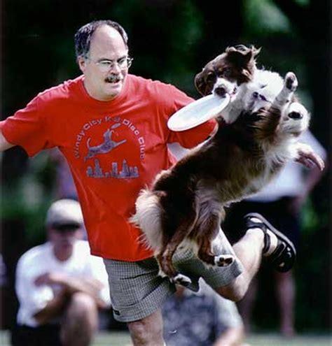 do rottweilers bark a lot do mini australian shepherds bark a lot australian shepherd tips australian shepherd