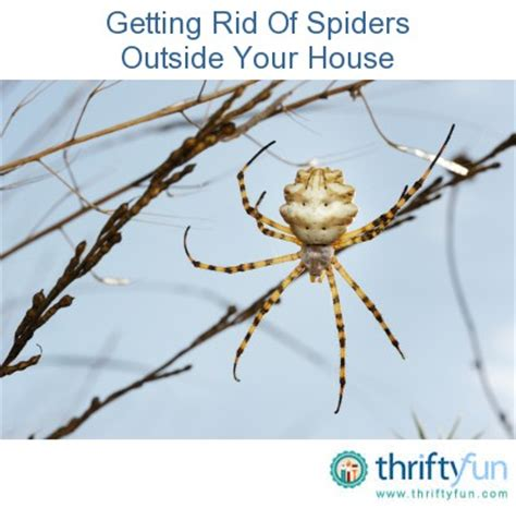 how to get rid of spiders in christmas tree getting rid of spiders outside house thriftyfun