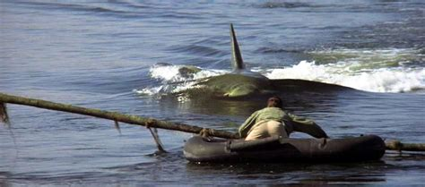 jaws story on boat jaws 2 1978 that was a bit mental