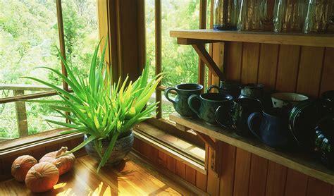 plants     house udesign