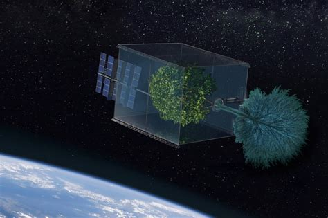 Repurpose by Can A Tree Grow In Space Usc News