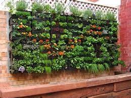 membuat taman vertikal di lahan yang sempit desain denah rumah minimalis desain denah rumah
