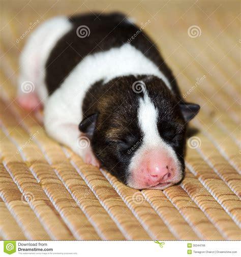 newborn puppies open newborn royalty free stock image image 35344766