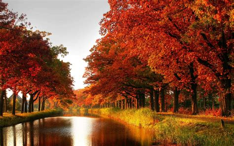 fall landscaping autumn fall tree forest landscape nature leaves wallpaper