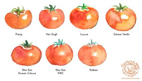 comparing watercolor brands using tomato drawings cynthia inside