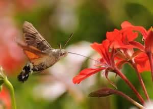 comment attirer les papillons dans jardin