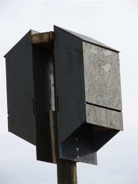 bat houses placement information house design and