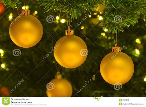 yellow christmas ornaments in christmas tree royalty free
