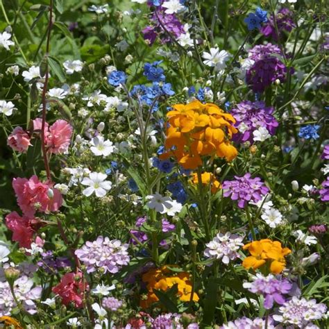 north american shade wildflower mix pack