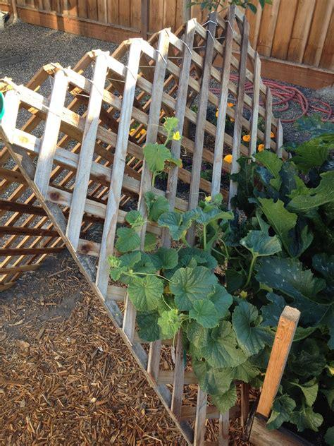 Vertical Gardening Zucchini Morrison Victory Garden Pyramid Support For Vertical