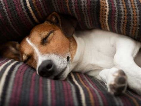 do puppies sleep through the teaching your puppy to sleep through the pets4homes