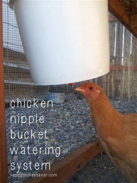 money with chickens how to make up to 12k a year with just 15 chickens books building a chicken waterer using a plastic