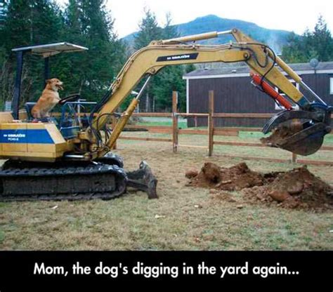 Heavy Equipment Memes - 33 funny pics memes with humorous intentions team