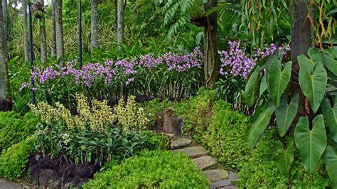 Botanic Garden Orchid Garden Singapore Botanic Gardens And National Orchid Garden