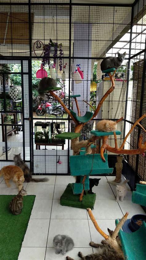 penitipan kucing rumah kucing kaka kucinggaul