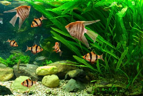 types of aquarium types of freshwater aquariums the aquarium setup