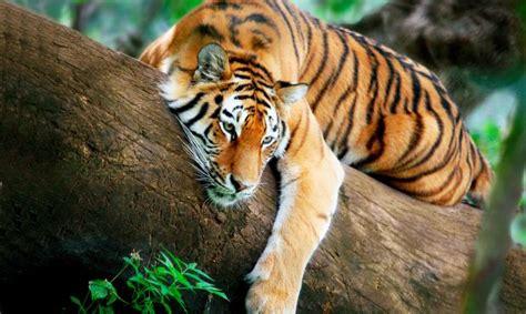 imagenes animales exoticos hermosos animales ex 243 ticos que pueden ser peligrosos animaleshoy
