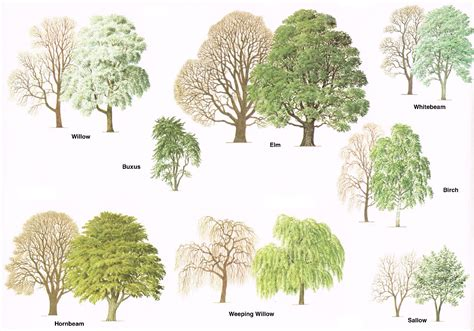 different types of trees types of trees medway valley line
