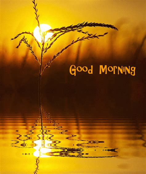 wallpaper gif good morning good morning gif images only wallpaper images