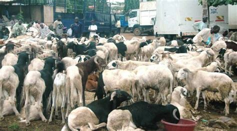 ram prices high ram sellers blame high prices on costly feeds today ng