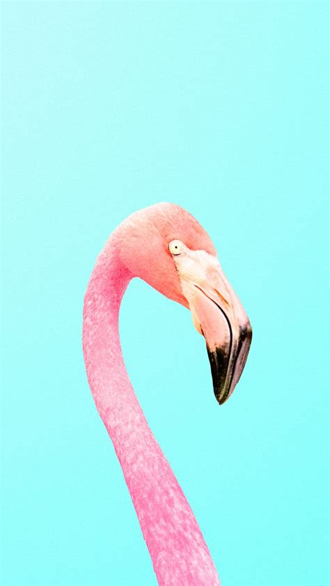 flamingo wallpaper iphone 5 45 best fancy flamingos iphone wallpapers images on