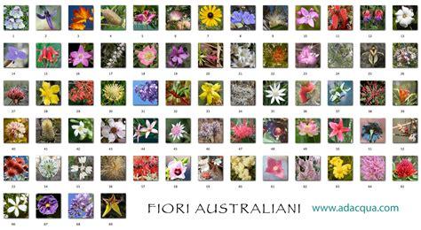 elenco nomi dei fiori adacqua iridologia e dintorni a cura di elisabetta conti