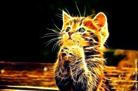 photos wallpaper cats abstract wallpapers hd photos images for desktop