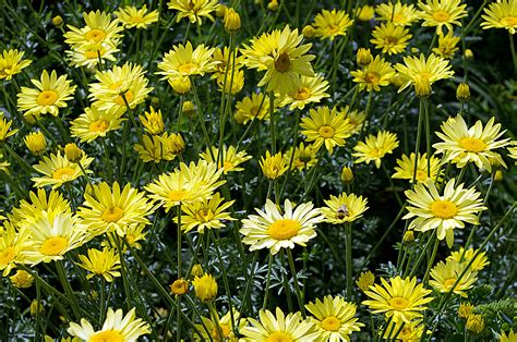 summer flowers free stock photo public domain pictures