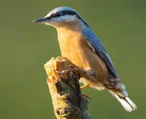le vogel bird quizzes garden birds 03 not uncommon