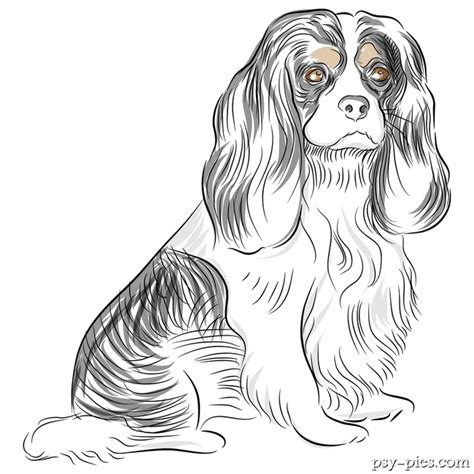 coloring pages of cavalier king charles spaniels cavalier king charles spaniel coloring pages coloring pages