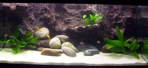 aquascape piranha aquascape online 28 images ompok catfish 5 quot ompok
