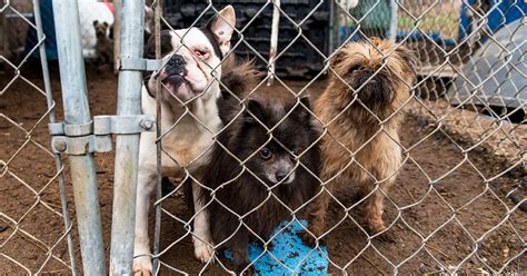 aspca puppy mills advocacy alert aspca