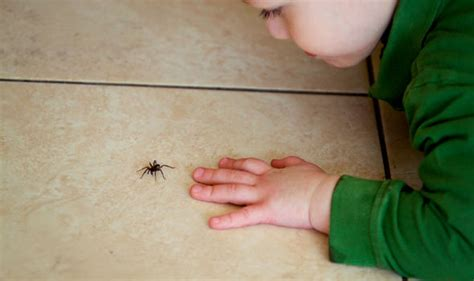 how to get rid of spiders in your house how to get rid of spiders in your house do conkers keep them away property life