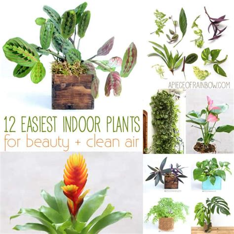 Houseplants That Don T Need Light grow beautiful indoor plants in glass bottles a piece of