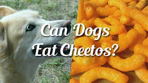 can dogs eat cheetos can dogs eat cheetos pet consider
