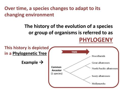 evolution how adapts to a changing environment with 25 projects build it yourself books ppt evolution powerpoint presentation id 3029723