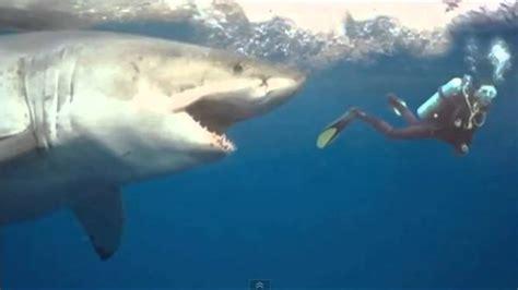 ataques de ataque real de un gran tibur 243 n blanco a un submarinista youtube
