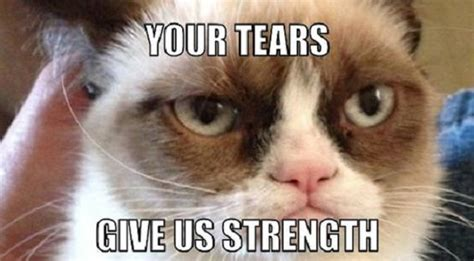 Best Grumpy Cat Memes - eldar balance problems i would like to see fixed page 2