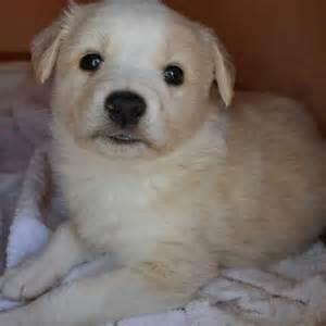 hair transplant cost in tianjin china cuccioli gratis da adottare 3 cuccioli da adottare blog
