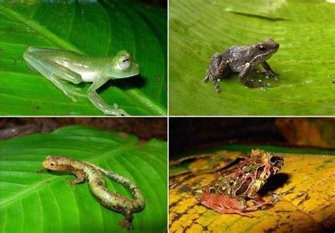 imagenes animales anfibios anfibios anfibios