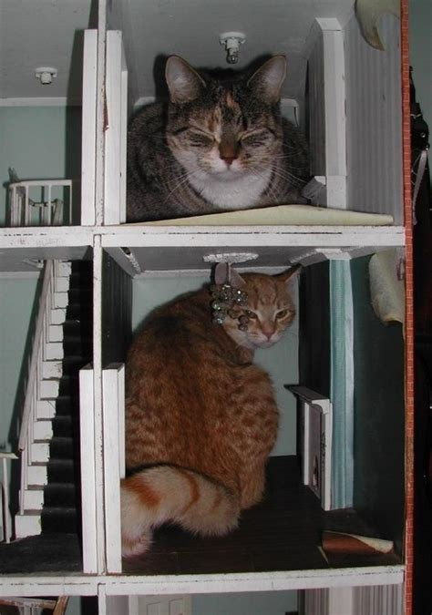 cat doll house two cats in dollhouse a dolls house pinterest