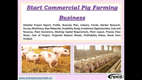 sle business plan on pig farming start commercial pig farming business youtube