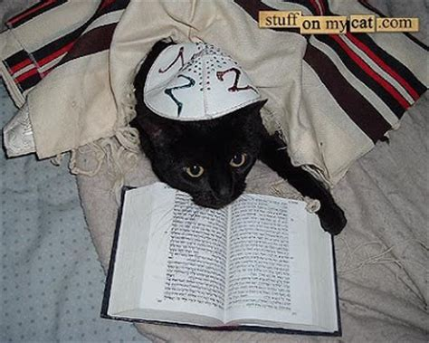 18 cats that are not overly excited about being jewish