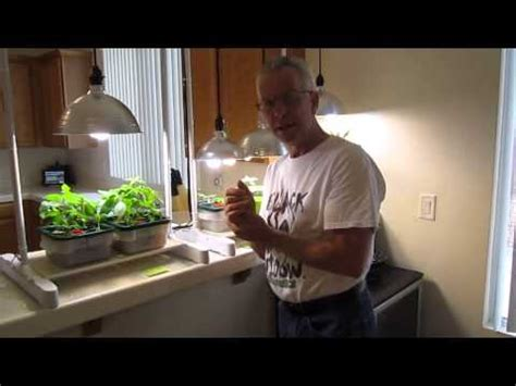 Cfl Grow Light Setup by How To Properly Grow Plants Using Compact Floresent